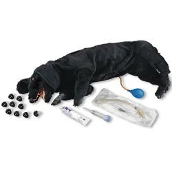 Basic Sanitary CPR Dog