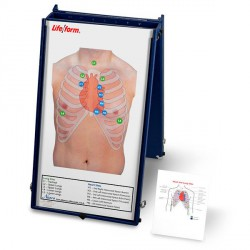 Auscultation Board with Case Only
